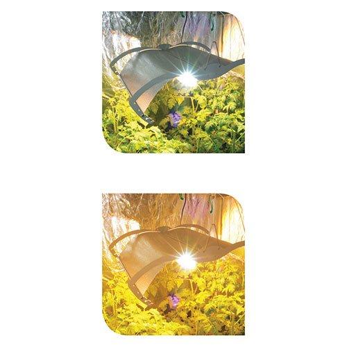LUMii GrowRoom Lenses1