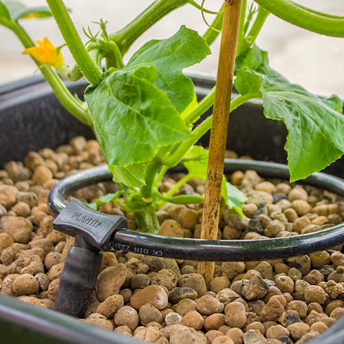 PLANTiT Watering Ring1